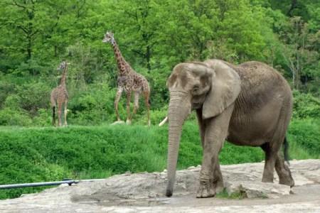 pittsburgh-zoo2