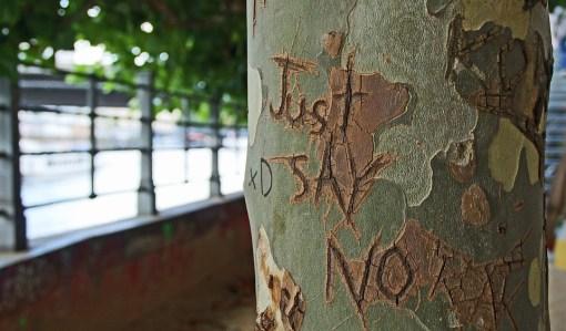 tree-bark-1209874_960_720