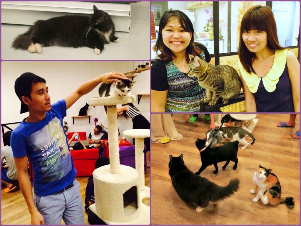 The Cat Cafe @ Bugis