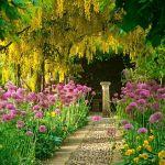 adelaparvu.com despre Allium ceapa decorativa, text Carli Marian 7