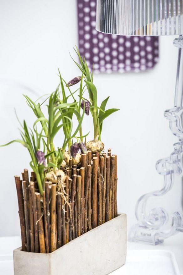 adelaparvu.com despre flori de primavara, cum se ingrijesc florile bulboase, text Carli Marian, Foto Floradania (16)