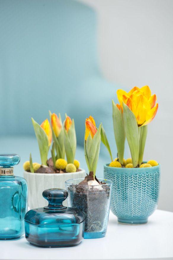 adelaparvu.com despre flori de primavara, cum se ingrijesc florile bulboase, text Carli Marian, Foto Floradania (8)