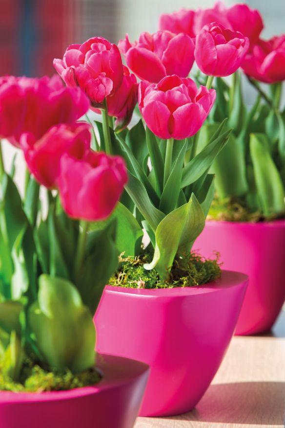 adelaparvu.com despre flori de primavara, cum se ingrijesc florile bulboase, text Carli Marian, Foto Floradania (9)