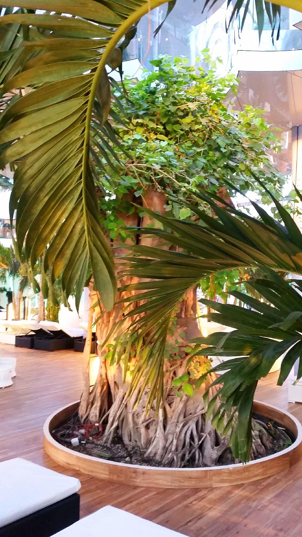 adelaparvu.com despre Therme Bucuresti, zona The Palm (33)