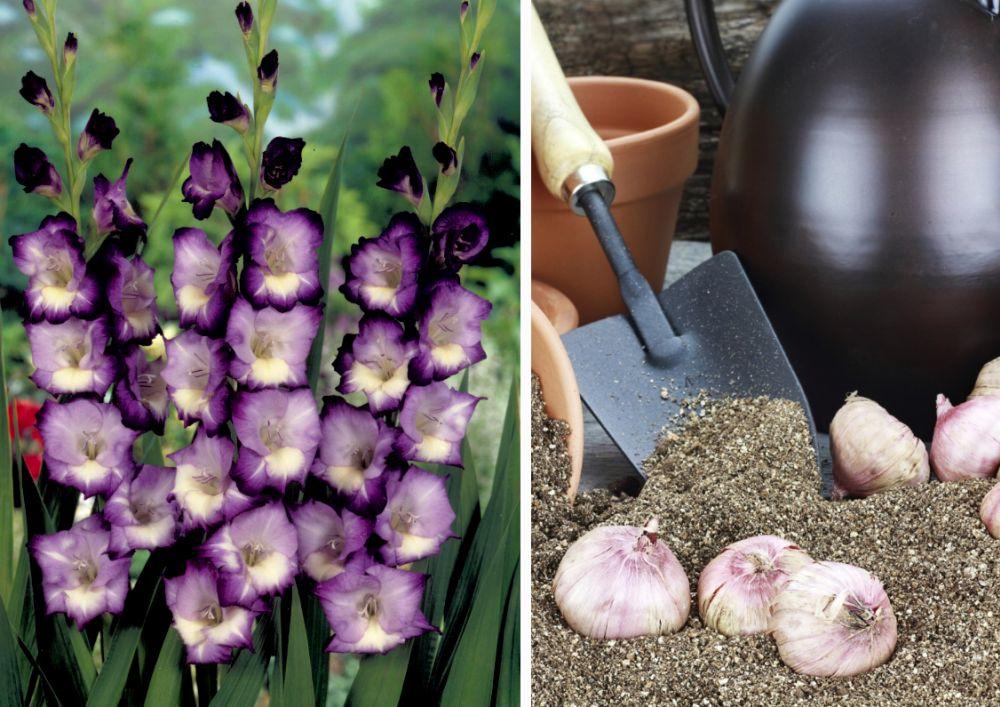 Cum pregătim plantele bulboase și cu rizomi pentru iernare
