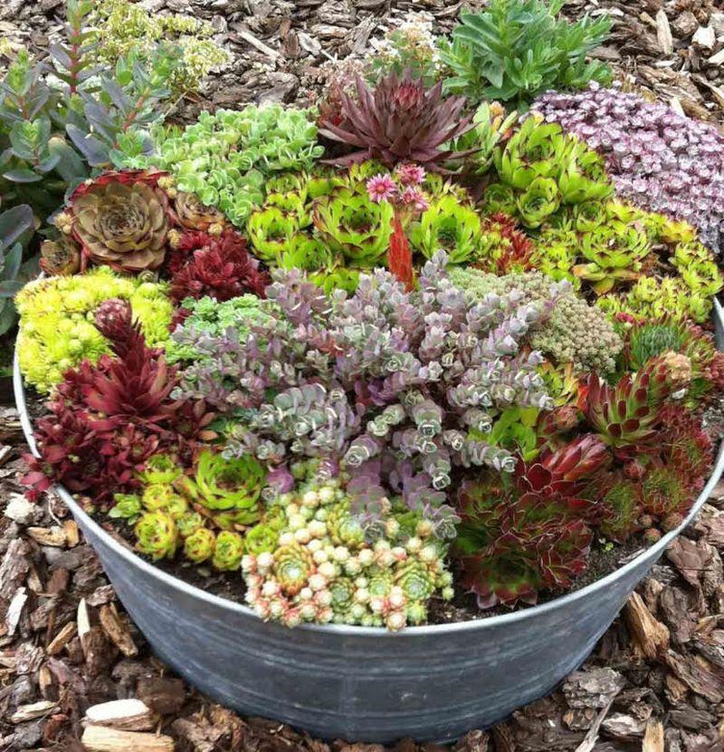adelaparvu-com-despre-plante-suculente-rezistente-la-frig-text-carli-marian-9