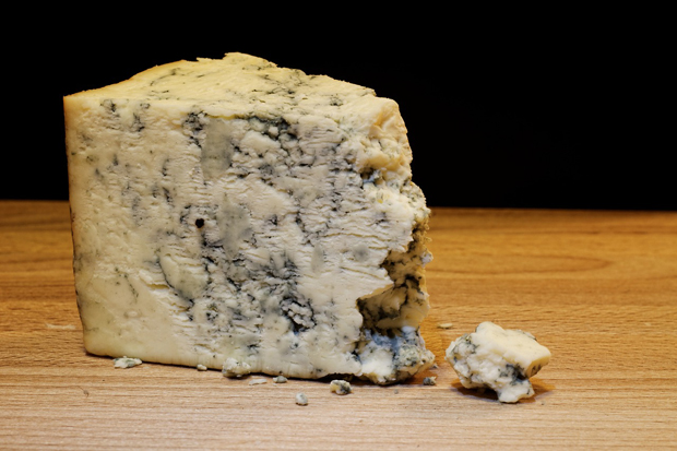 mold-cheese-933309_1280