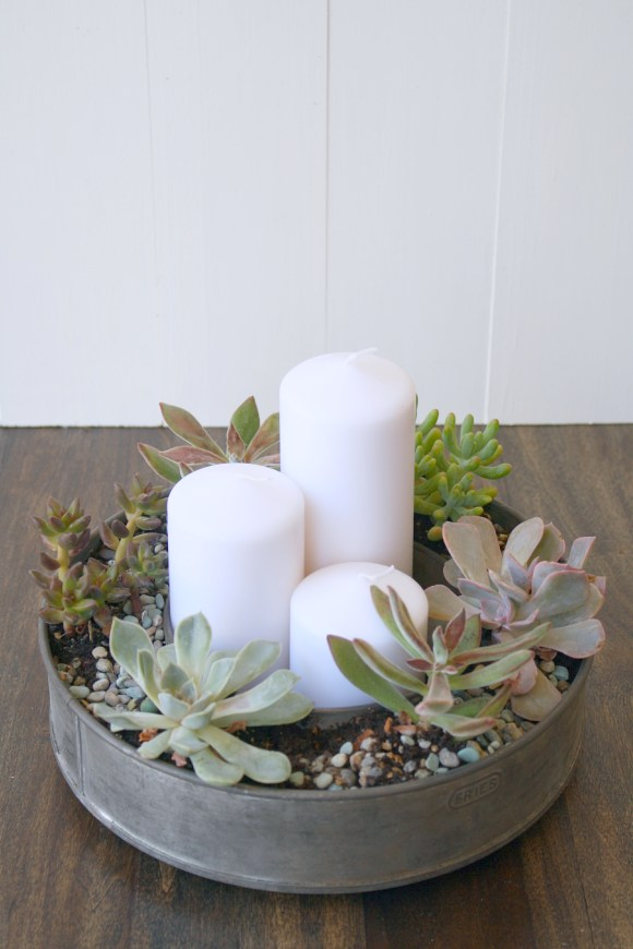 succulents and thrifty finds