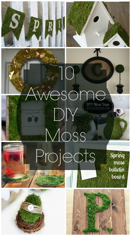 10 Awesome DIY Moss Projects