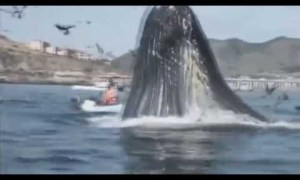 GIANT WHALE SCARES 2 KAYAKERS BY APPEARING FROM NOWHERE A FEW FEET AWAY