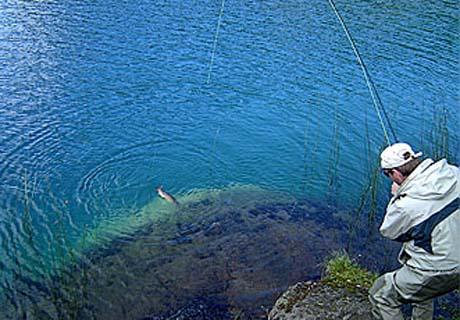 Bajar los juegos a través de torrent la pesca 2016