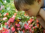 boy n butterfly on flower