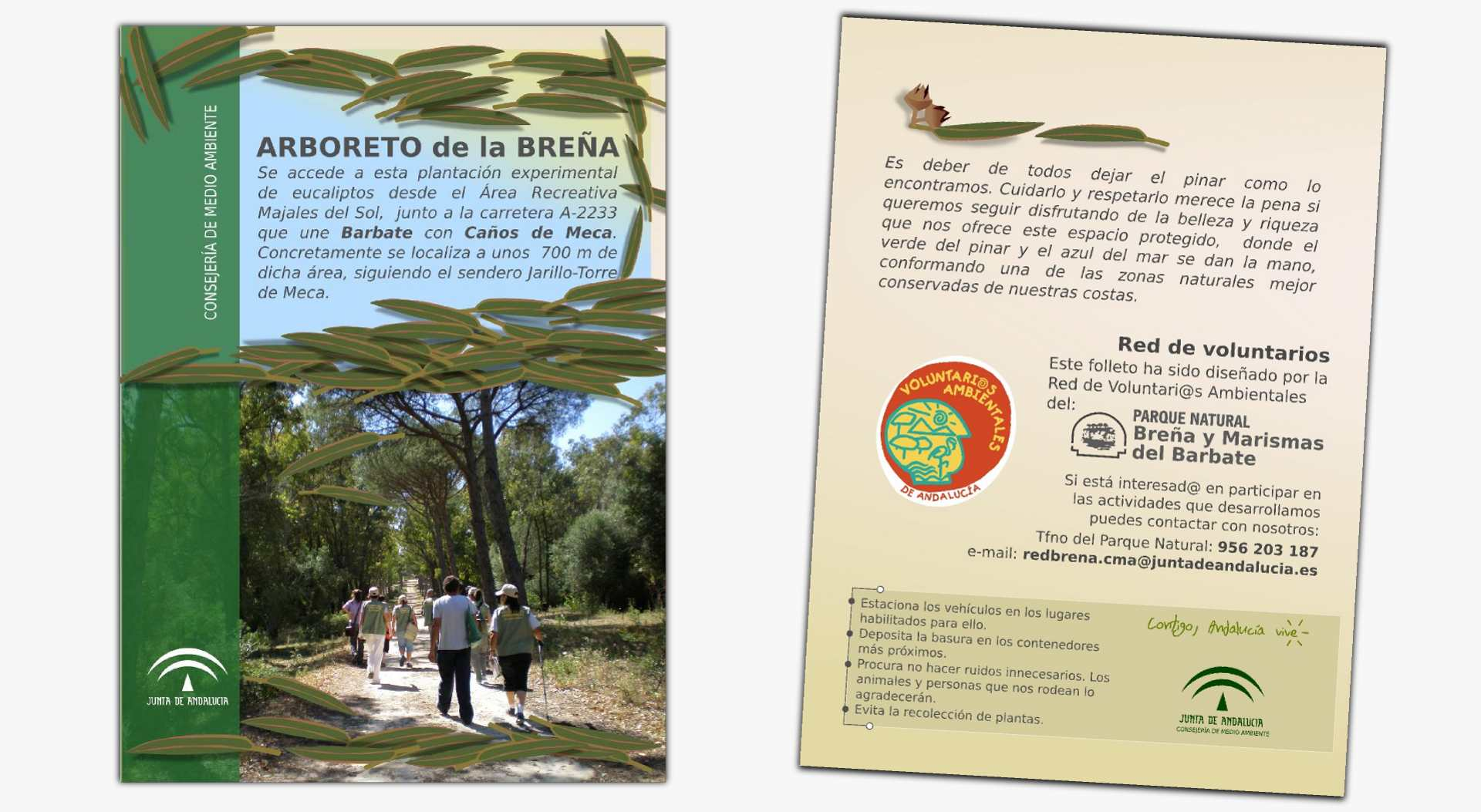 Arboreto de eucalipto adsise dise o de la informaci n - Informacion sobre el eucalipto ...
