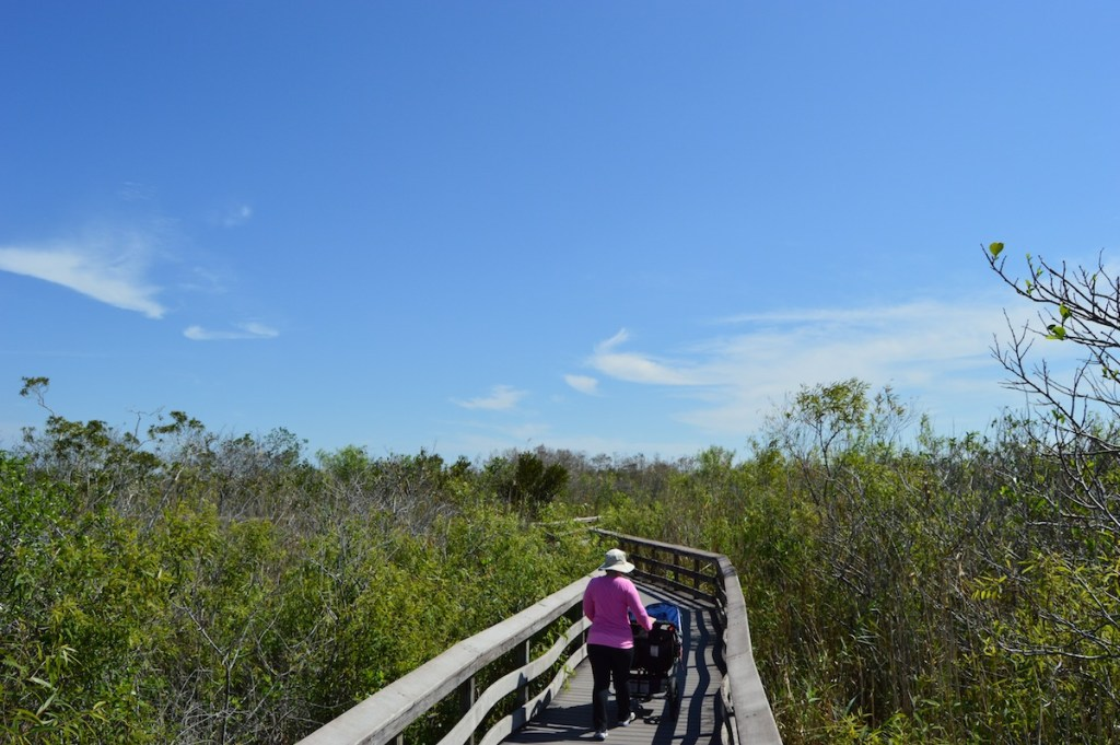 Strolling along the Anhinga Trail, looking for gators.