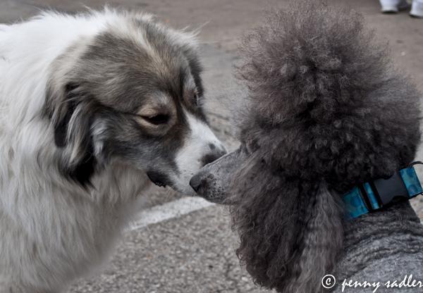 dogs, local markets, dallas