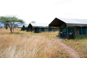 Halisi Camp is a mobile camp located to be convenient to the migration.