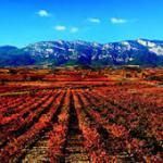 Viñedo (Rioja Alavesa)