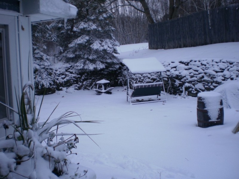 Snowy Yard with Snow coated Swing