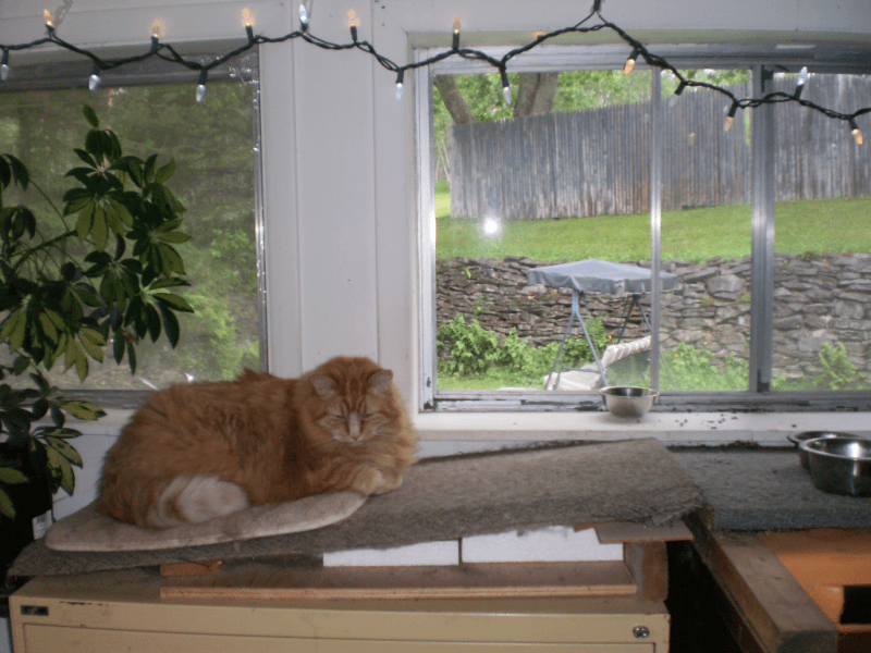 Cat napping near a window on a rainy day.