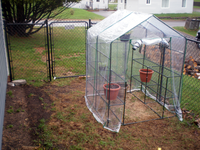 Cathi's Greenhouse We put it together on May 17th.