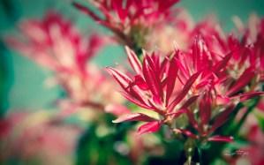 Pink-Flame-wallpaper_byAEtherPie