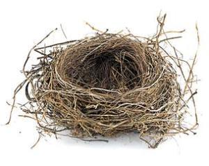 2.10-Empty-nest-304