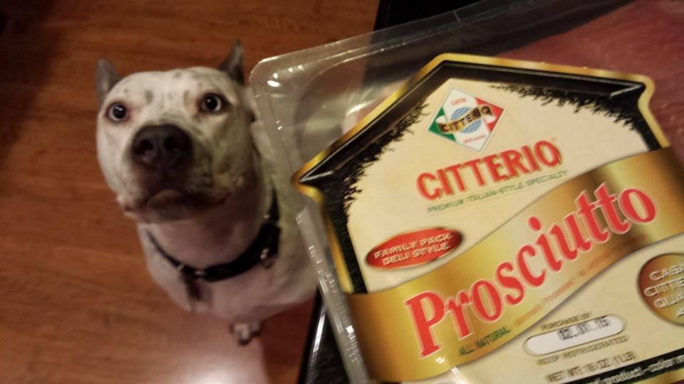 Our dog Atticus is quite a fan of fancy Citterio prosciutto ham (Photo Credit: Adroit Ideals)
