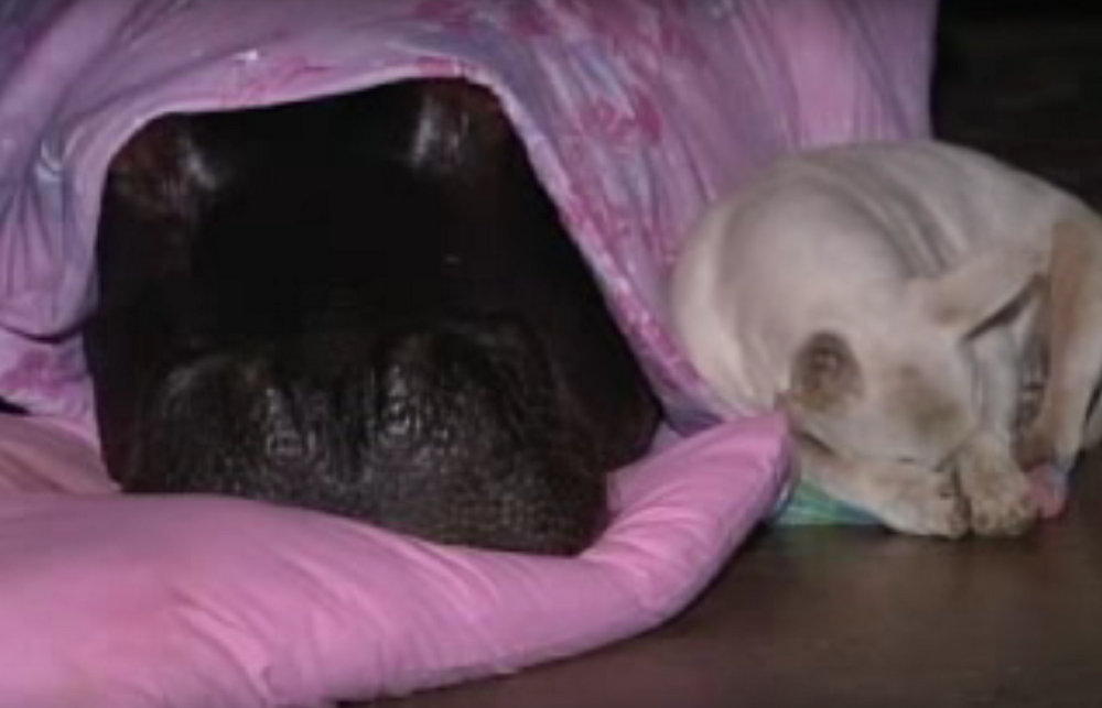Hippo in house 2016-01-01 16.48.06