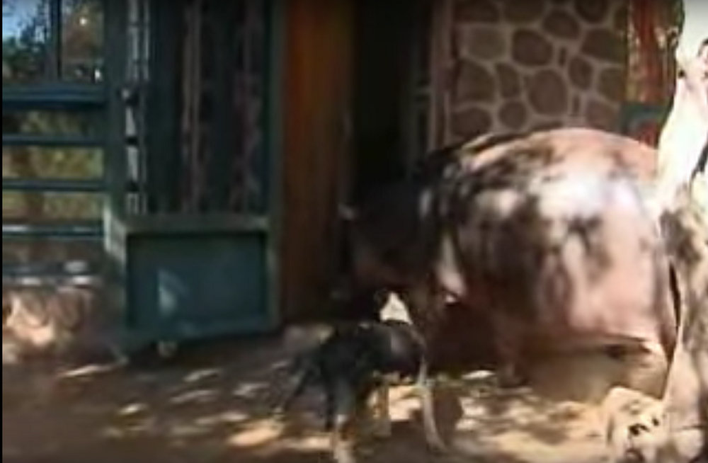 Hippo in house 2016-01-01 16.48.58