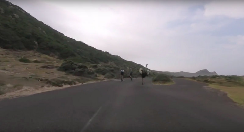 Cyclists chased by an ostrich 2016-03-09 21.45.07