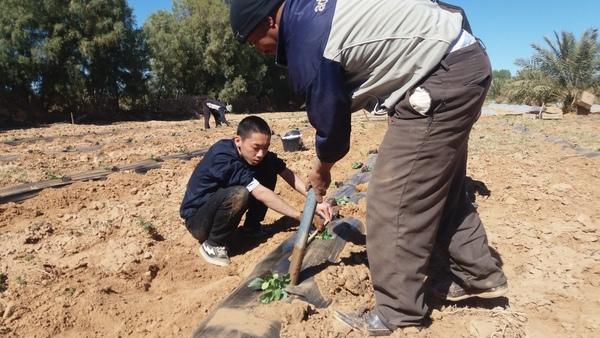 画像2:地元労働者と農業をしている様子