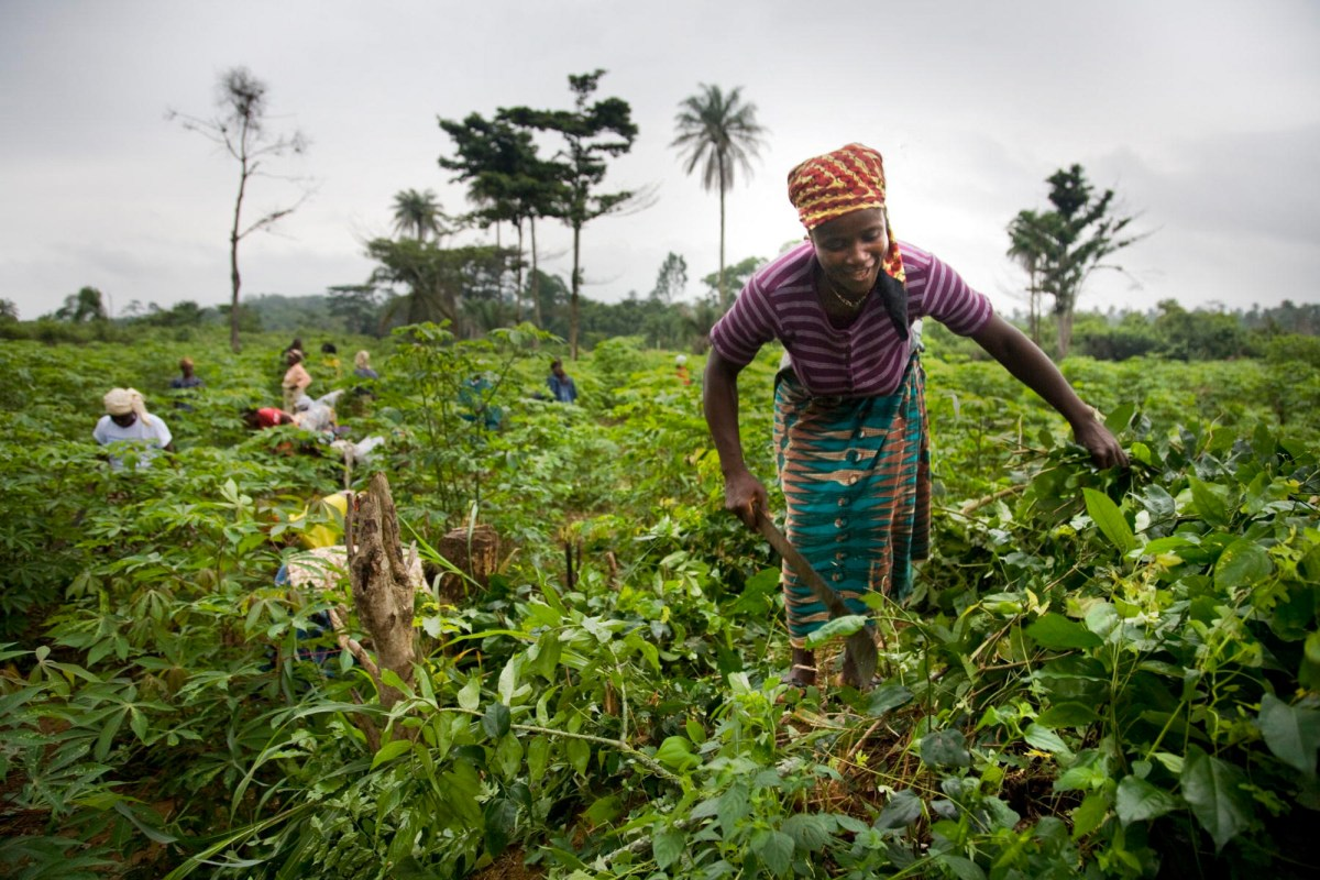 JICA、三井物産・ETG社と協力覚書を締結!連携してアフリカの小規模農家への生計向上支援!