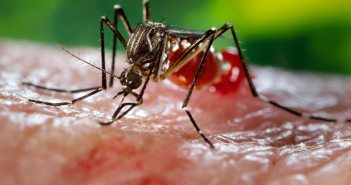 16741-close-up-of-a-mosquito-feeding-on-blood-pv