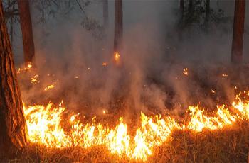 D'importants incendies se sont déclenchés plus tôt ces derniers mois dans plusieurs endroits de la Tunisie. La hausse du nombre des incendies provoqués sont des actes prémédités qui suscitent la crainte et sèment le doute