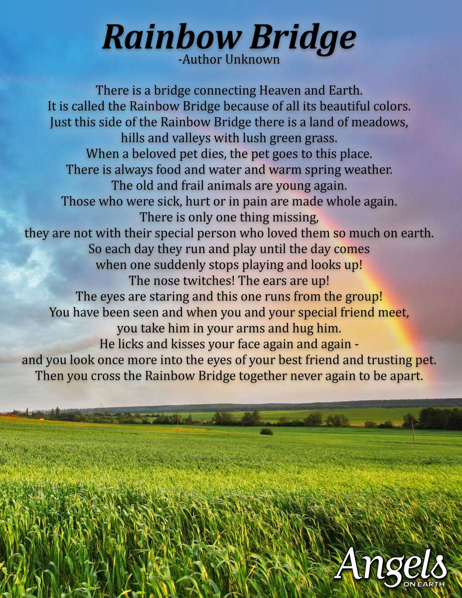 Fullsize Of Rainbow Bridge Dog