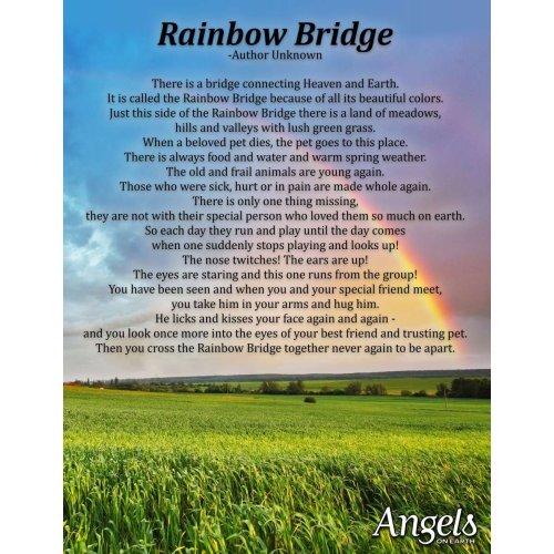 Medium Crop Of Rainbow Bridge Dog