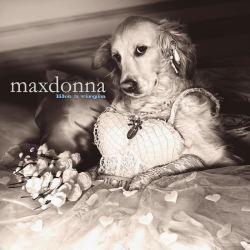 酷影像:攝影師將愛犬化身同志天后 瑪丹娜本尊都喊讚