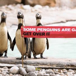 酷新聞:動物園歡慶同志驕傲月 致敬同志企鵝