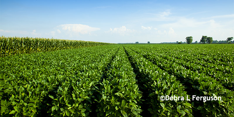 implications of the soybean industry and Soybeans & oil crops sugar & sweeteners international consumer and food industry trends.