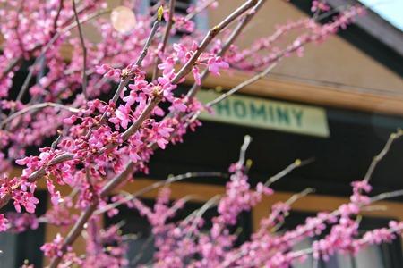 hominy_flowers_depot