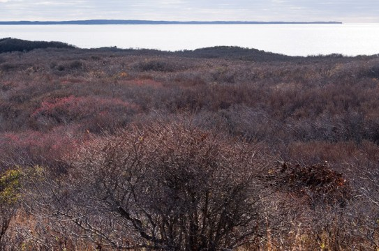 Rare heathlands off Moshup Trail are at center of 18-year-old court case. - Mark Lovewell