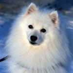Spidshundeklubbens nye hjemmeside