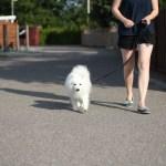 10 gode råd til den hensynsfulde hundeejer