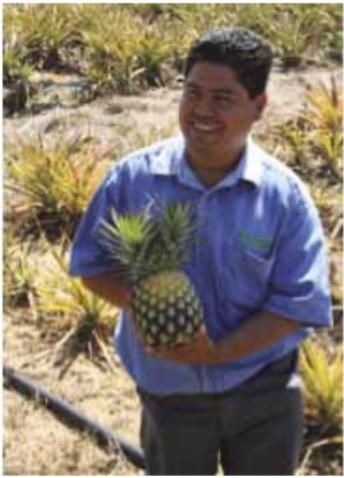 pina-criolla (9)