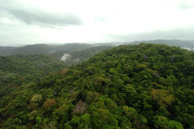 Panama Rainforest