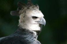 harpy-02