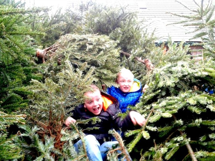 Kids learning to recycle - collecting christmas trees for money