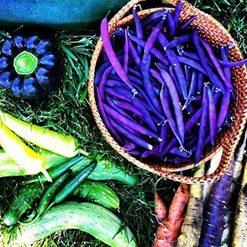 Prepping Garden Soil