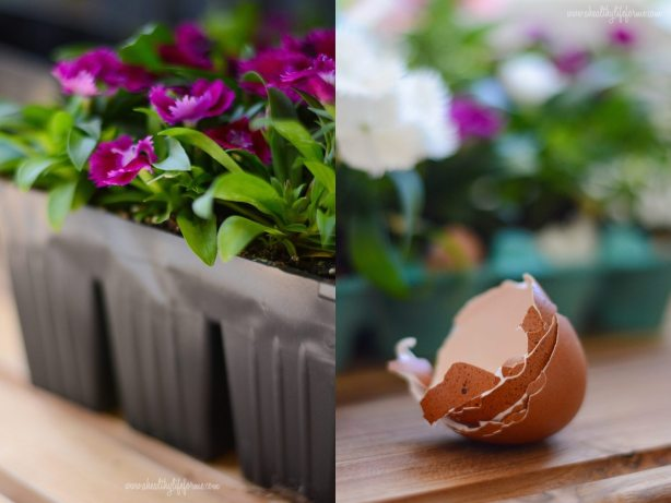Supplies for DIY Eggshell planters #EarthDayProjects