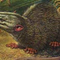 Mammalianchauvinism
